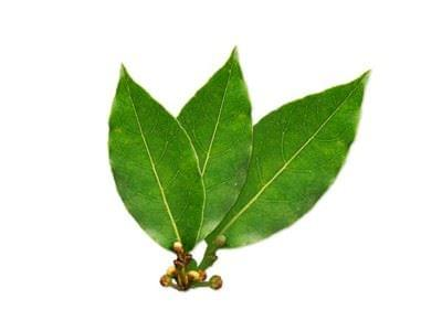 Antiinflamatorio natural - laurel