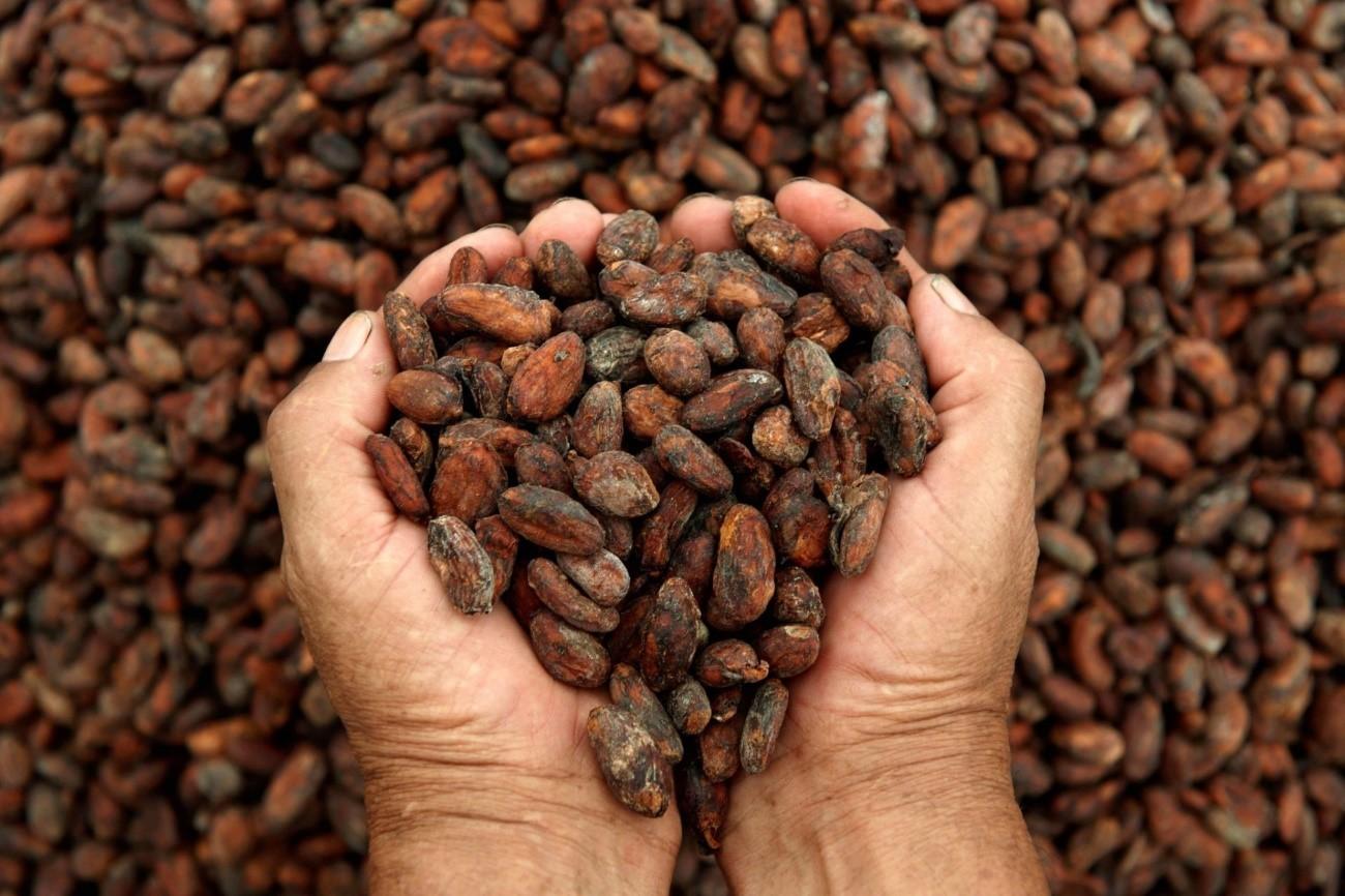 Propiedades del cacao puro 100